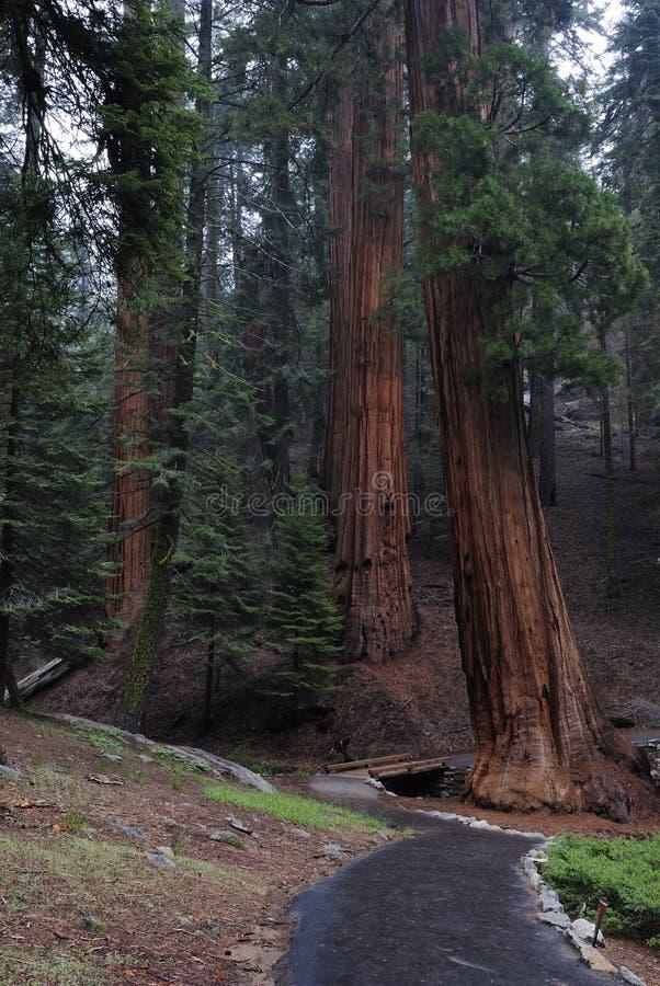Fuga de caminhada no parque nacional de Sequoia imagens de stock royalty free