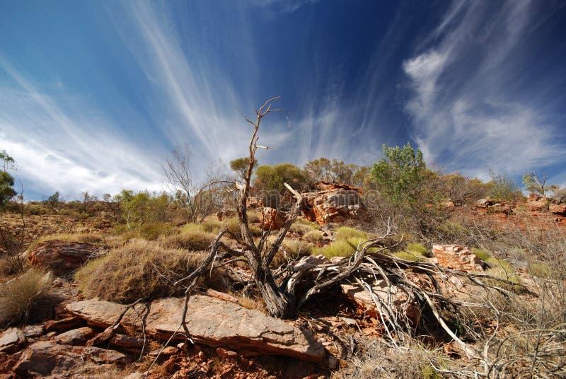 Fuga de Larapinta - na trilha fotografia de stock