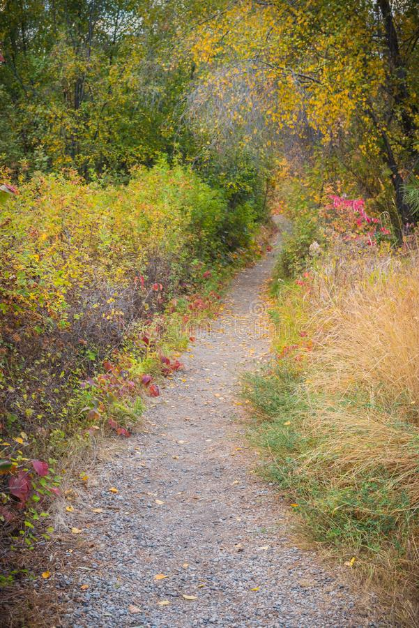 Fuga de natureza do lago Vaseux através da floresta no outono foto de stock
