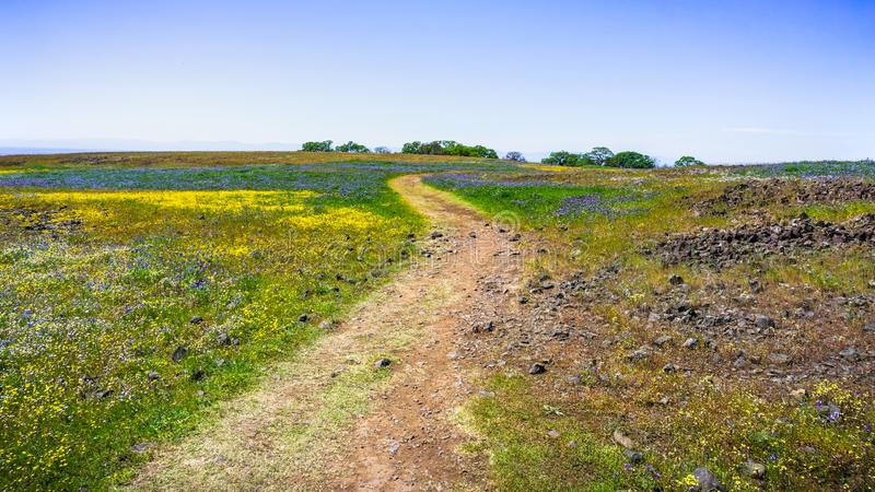 Fuga de passeio através dos campos cobertos nos wildflowers, reserva ecológica da tabela norte, Oroville, Califórnia fotos de stock