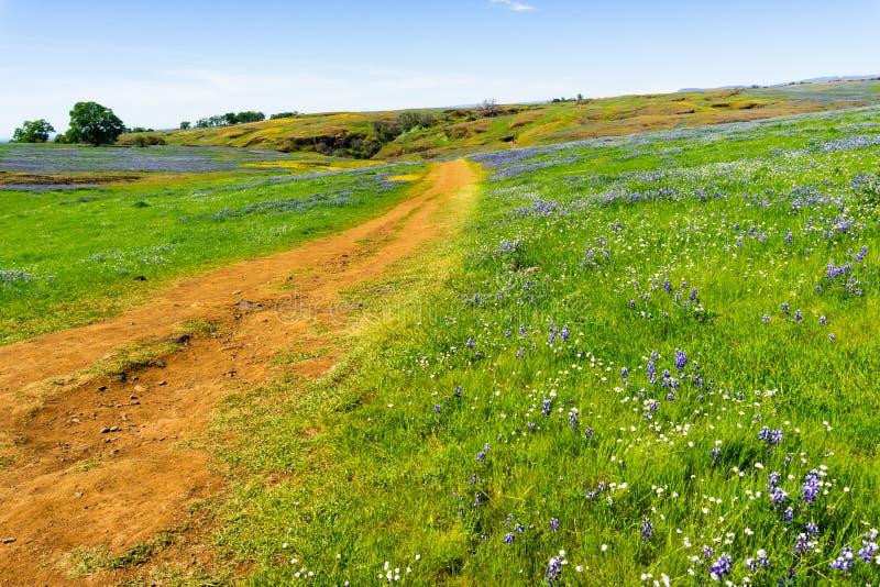 Fuga de passeio atrav?s dos campos cobertos nos wildflowers, reserva ecol?gica da tabela norte, Oroville, Calif?rnia foto de stock