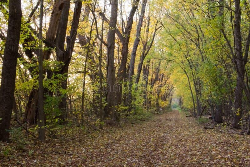 Fuga do canal de Illinois e de Michigan no outono foto de stock royalty free