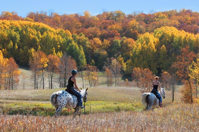 Fuga do cavalo em cores da queda fotos de stock royalty free