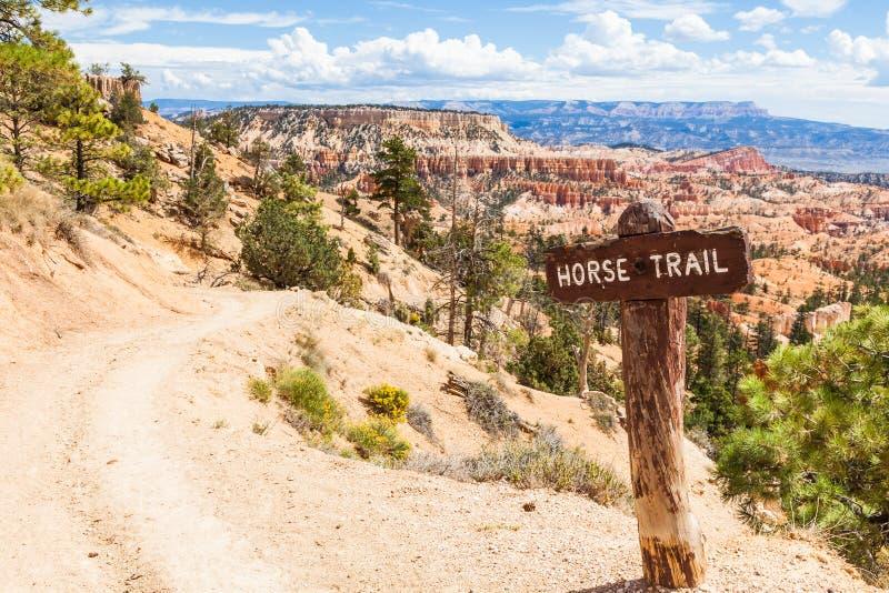 Fuga do cavalo no deserto foto de stock