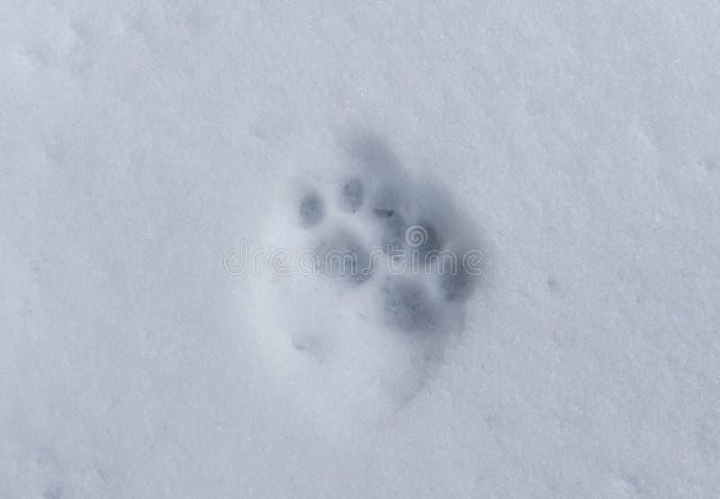 Fuga do gato na neve imagens de stock royalty free