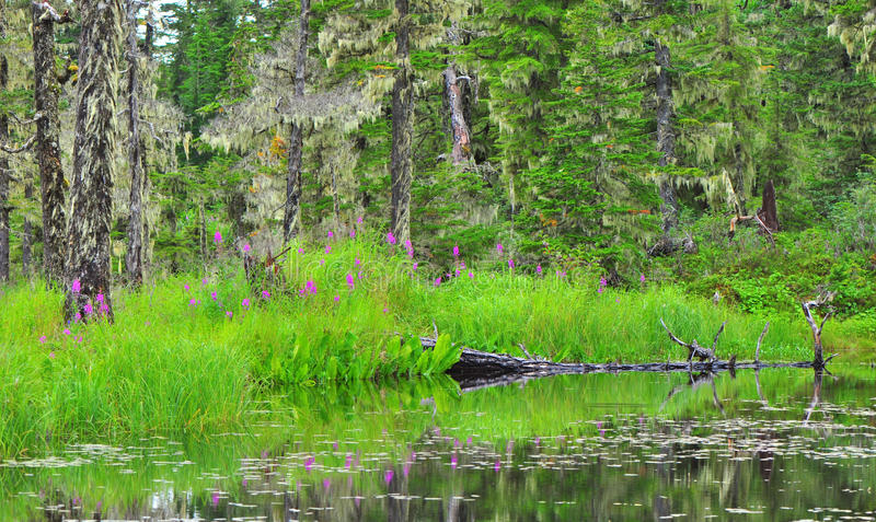 Fuga do lago Elsner foto de stock