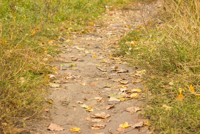 Fuga do outono foto de stock