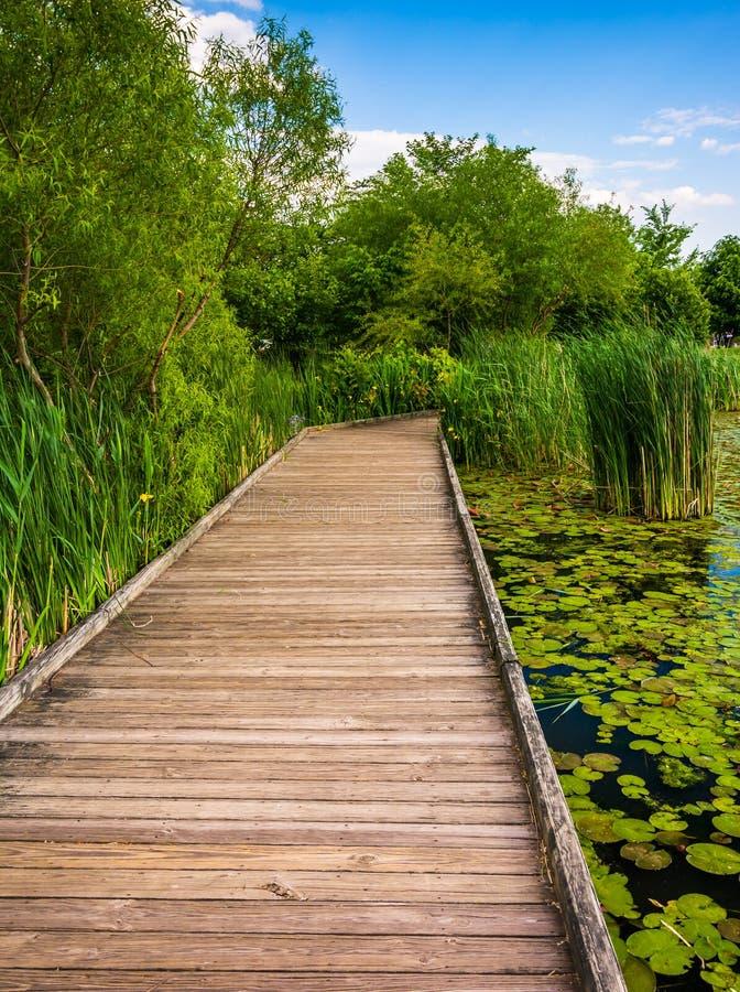Fuga do passeio à beira mar ao longo da lagoa em Patterson Park, Baltimore, março foto de stock