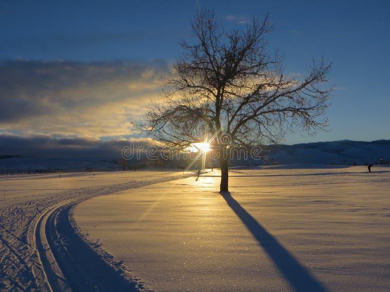 Fuga e trilhas nórdicas do esqui do corta-mato por uma árvore no por do sol nas montanhas fotos de stock royalty free