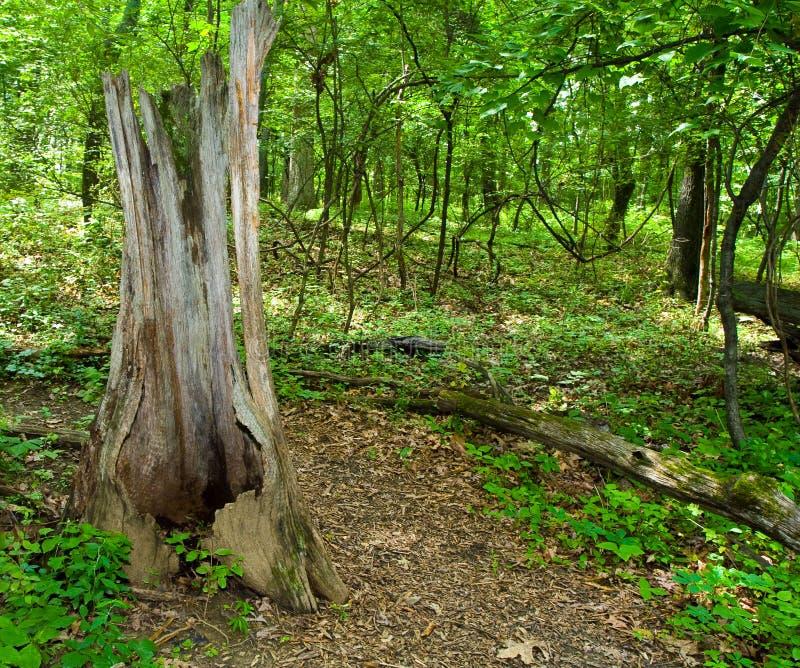 Fuga luxúria da floresta imagens de stock