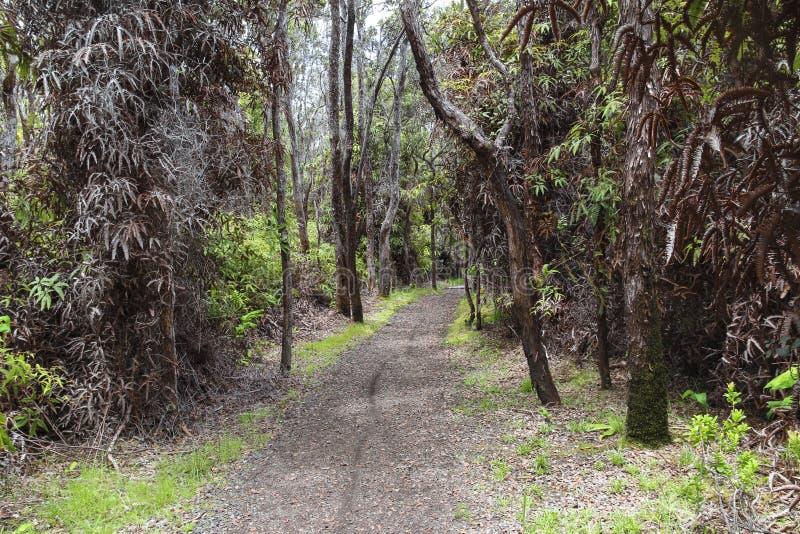 Fuga luxúria da selva de Kilauea Iki no parque nacional dos vulcões, ilha grande, Havaí imagem de stock royalty free