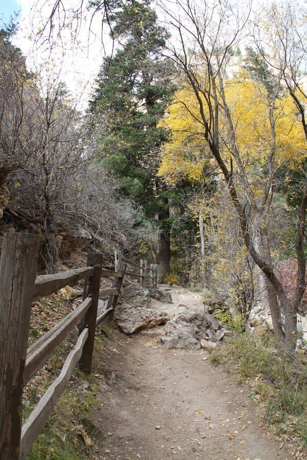 Fuga na floresta colorida imagem de stock