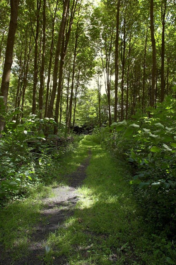 Fuga na floresta da mola foto de stock royalty free