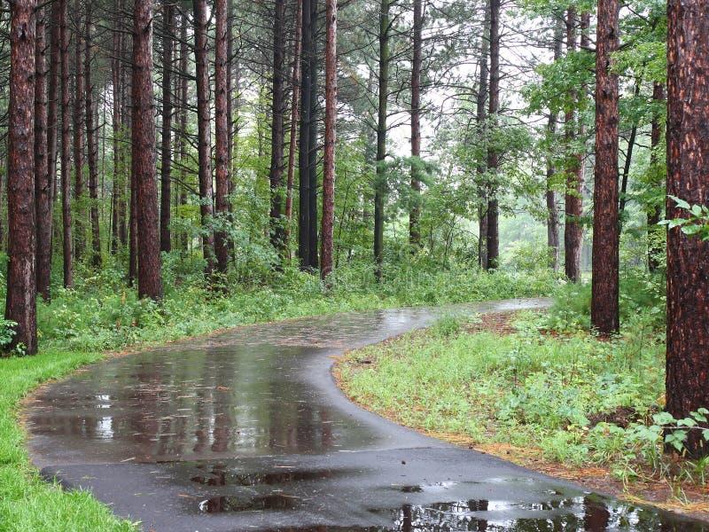 Fuga na floresta do pinho fotos de stock royalty free