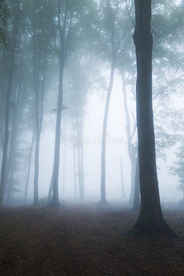 Fuga nevoenta assustador da floresta durante o outono foto de stock royalty free