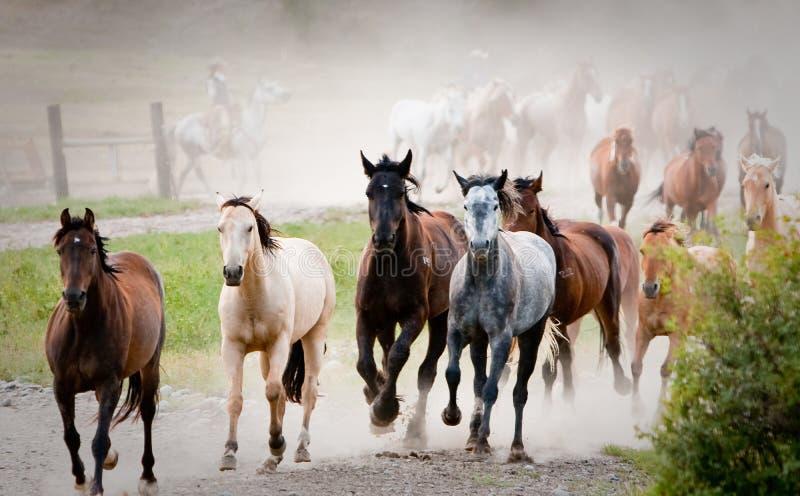 Fuga precipitosa dei cavalli colorati multi fotografia stock libera da diritti