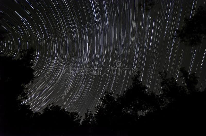 Fugas da estrela na floresta foto de stock royalty free