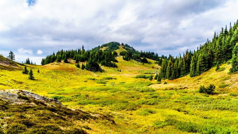 Fugas de caminhada em Tod Mountain perto da vila de picos de Sun do Columbia Britânica, Canadá imagem de stock