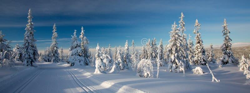Fugas do esqui do corta-mato imagens de stock royalty free
