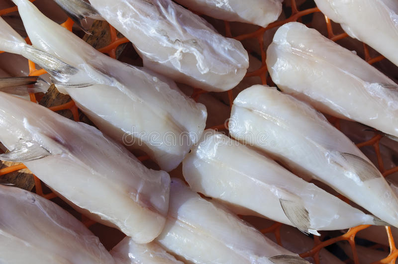 fugu 免版税库存照片