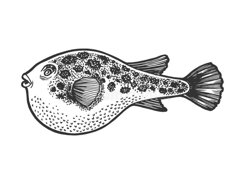 Fugu skissar den giftliga fisken att inrista vektorn stock illustrationer