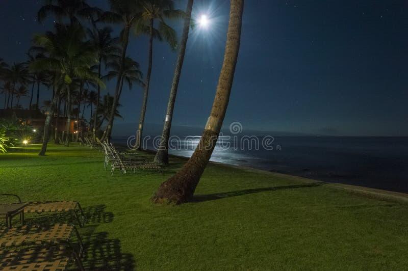 Fuite tropicale de nuit photographie stock