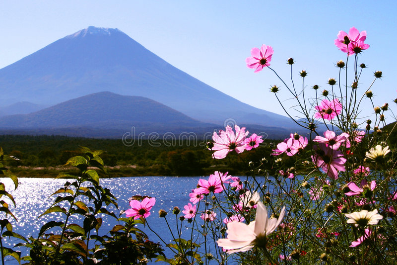 fuji λουλουδιών στοκ φωτογραφία με δικαίωμα ελεύθερης χρήσης