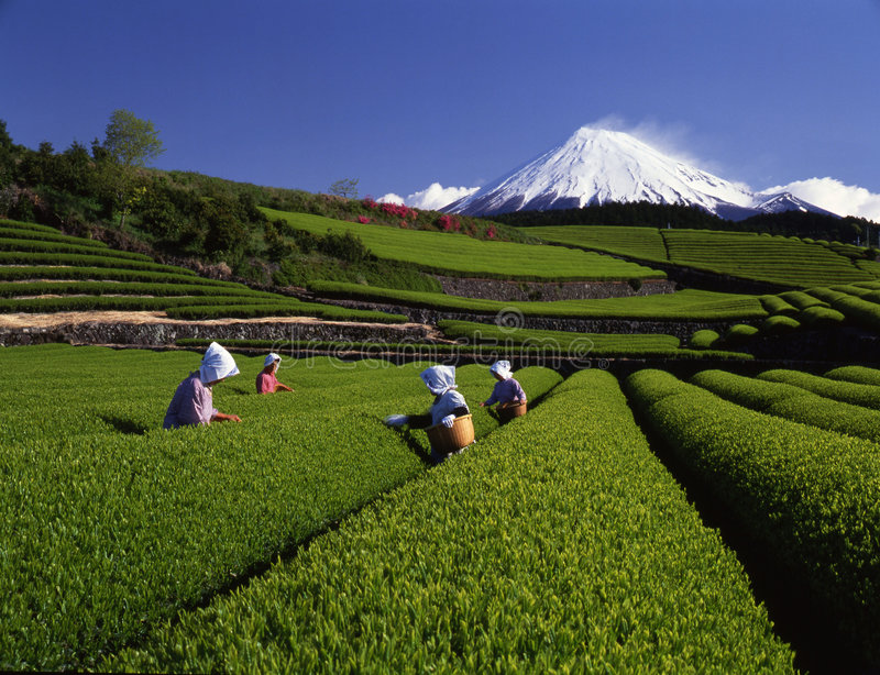Fuji 165 mt obraz stock