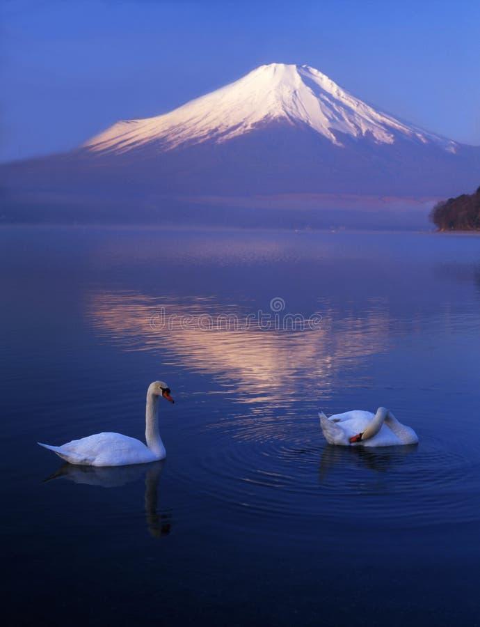 Fuji 403 mt zdjęcie royalty free