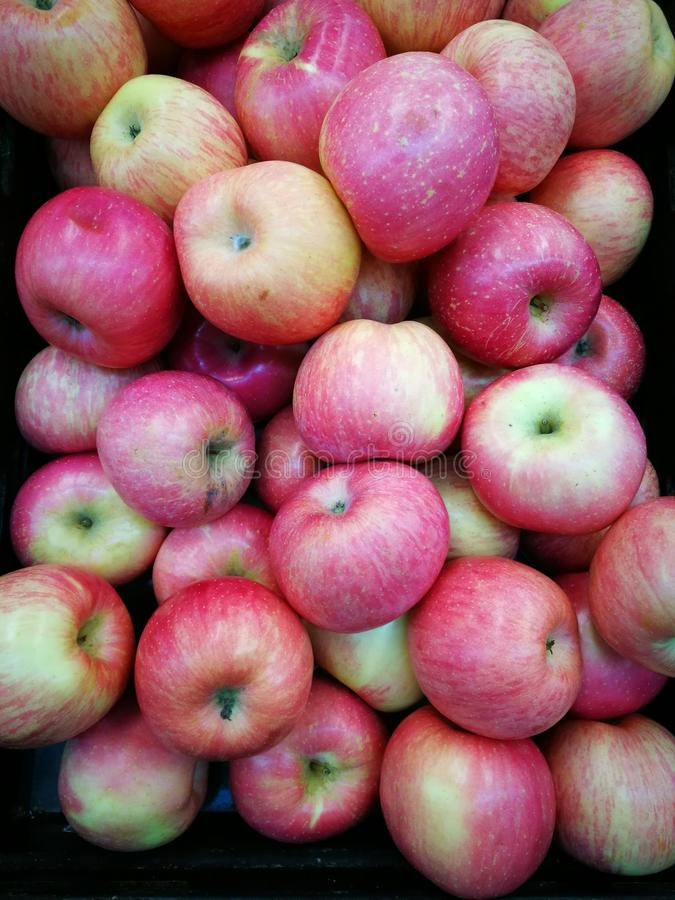 Fuji apples in red pink royalty free stock image