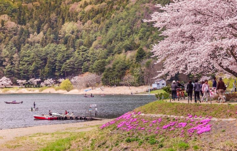 Fuji berg och Kawaguchi sjökusten med rosa träd för sakura körsbärblomningar i blom på våren i Japan arkivbilder