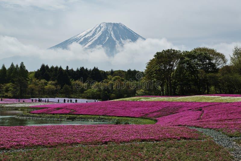 Fuji berg på Japan fotografering för bildbyråer