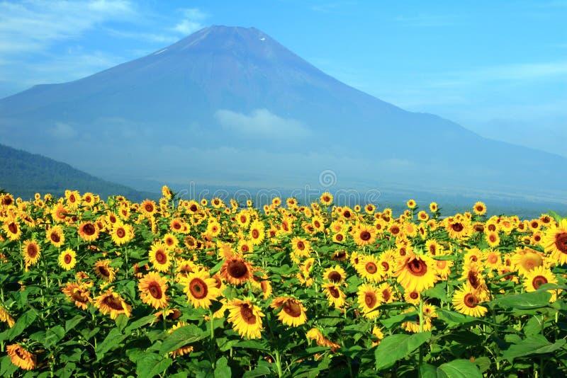 fuji góry słoneczniki obrazy stock