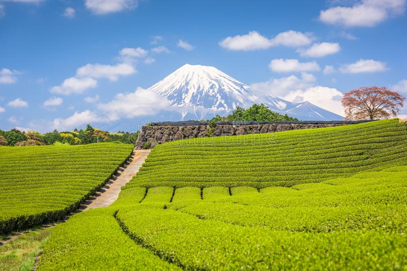 Fuji, Japan at Mt. Fuji and tea fields royalty free stock photos