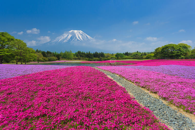Fuji met Roze Mos stock afbeelding