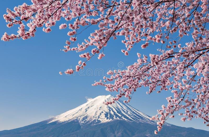 Fuji Mountain and Pink Sakura Branches at Kawaguchiko stock image
