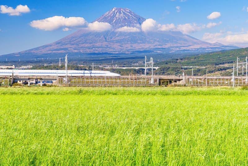 Fuji mountain with rice field stock photo