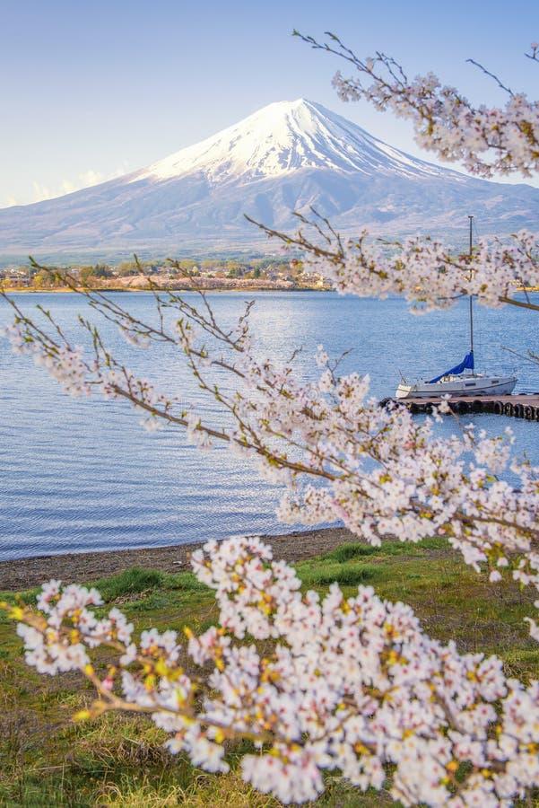 Fuji Mountain and Sakura Tree with Yacht Pier at Kawaguchiko Lake royalty free stock image