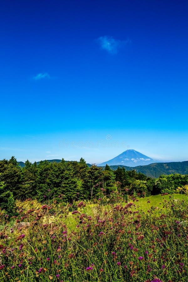 Fuji Mountain in summer stock photography