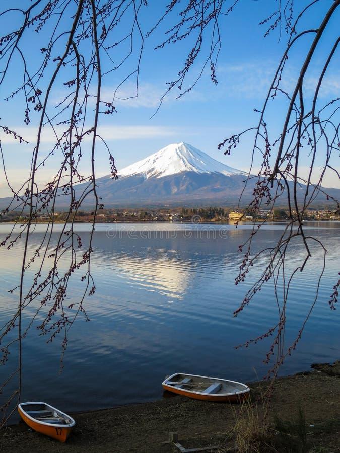 Fuji mountain view through lake and sakura branches stock photography