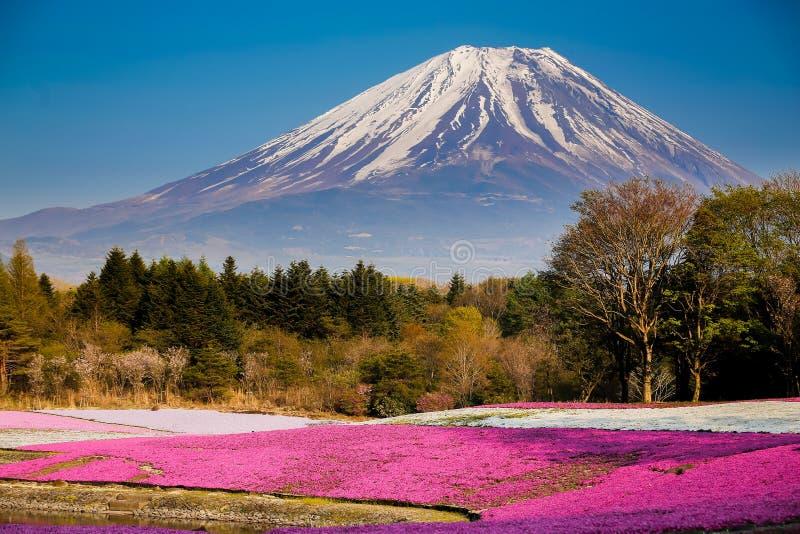 Fuji Mt avec le champ de phlox de mousse photographie stock libre de droits