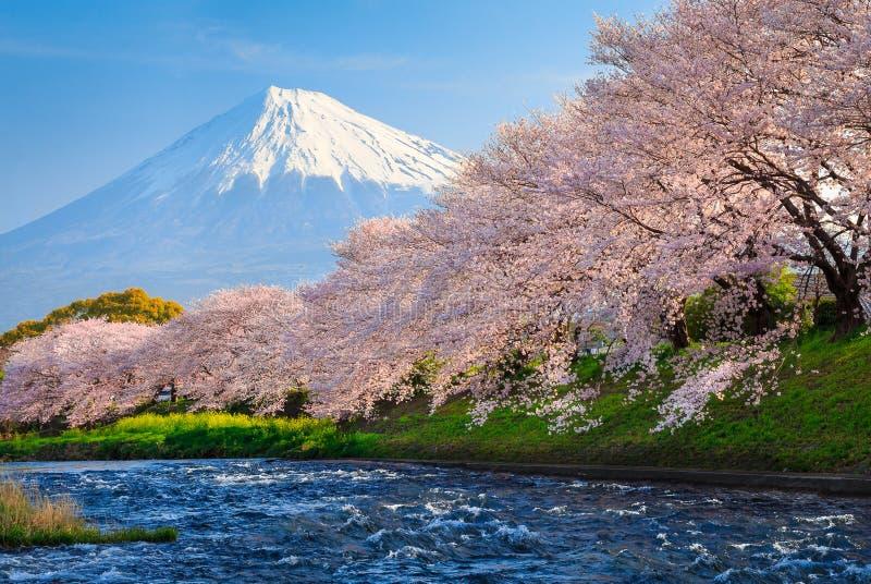 Fuji and Sakura. At river in the morning