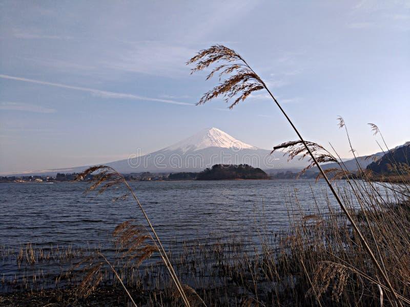 Fuji Yama View med Tall Grass från Kawaguchi Lake - Japan royaltyfria foton