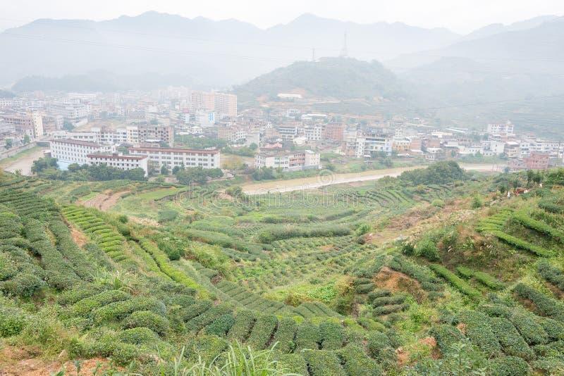 FUJIAN, CHINE - 24 décembre 2015 : Plantation de thé dans la ville de Xiping un fa images libres de droits