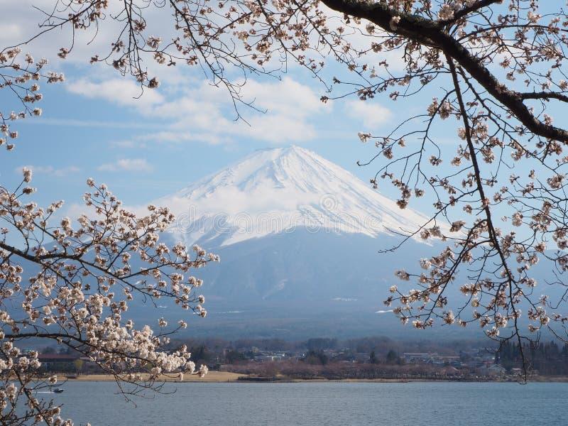 Fujiberg en de bloesem van de sakurakers in de lentetijd van Japan royalty-vrije stock foto