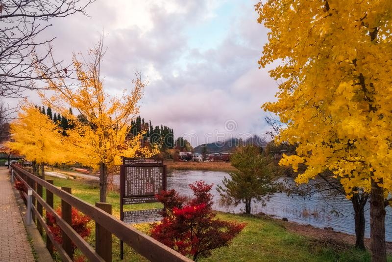 Autumn Trees on the side of Lake Kawaguchiko, Japan. stock images