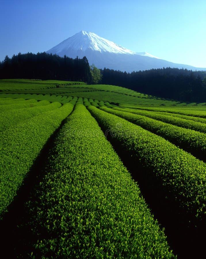 Download Fujisan 146 stock image. Image of scenery, refreshing - 3861121