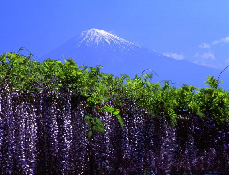 Fujisan 159 royalty-vrije stock afbeeldingen