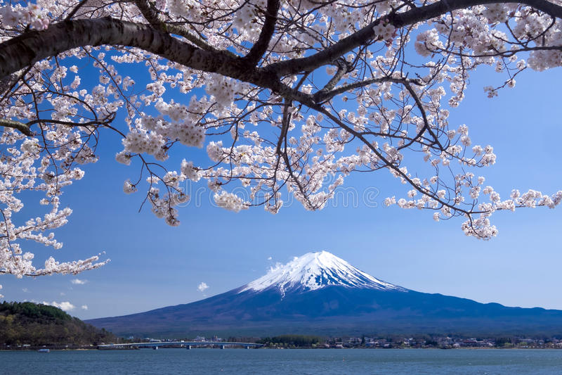 Fujisan-Berg mit Kirschblüte im Frühjahr, Kawaguchiko See, Japan stockfotografie