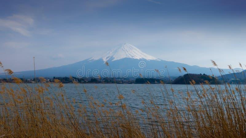 Fujisan und See Kawaguchi mit goldenem Gras im Vordergrund stockbild